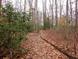 january-the-path