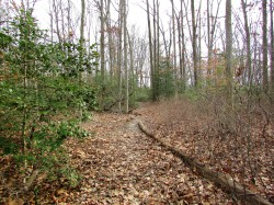 the-path-jan-29