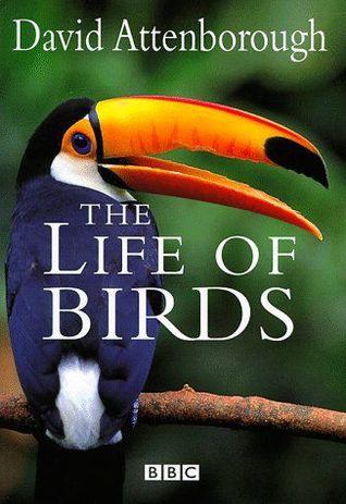 life-of-birds