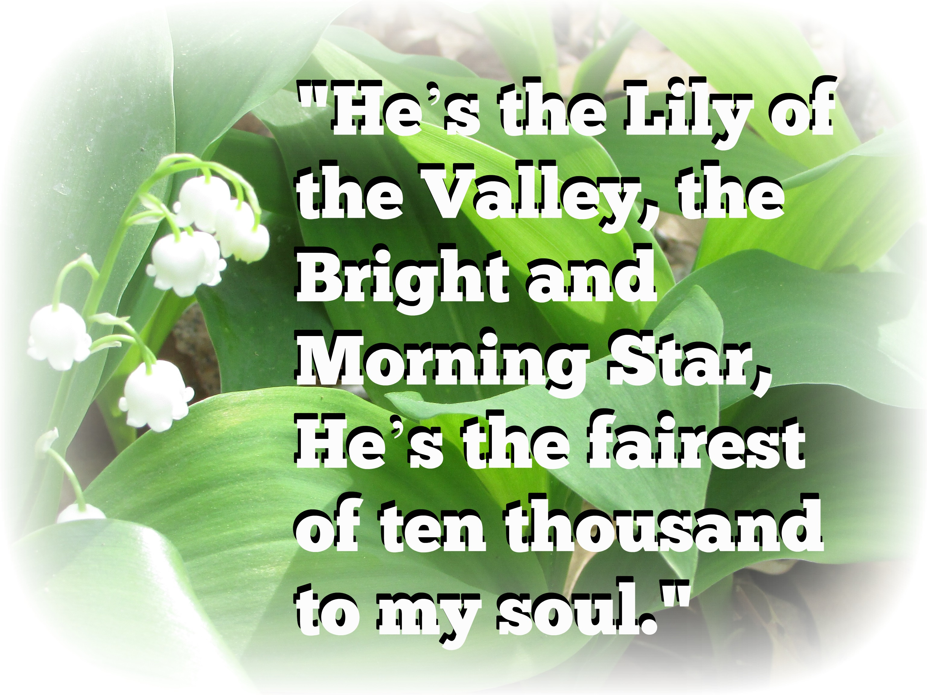 Quote the lily of the valley minding my ps with q yesterday i was reminded of this description of jesus and the bible verse it was based on when i noticed the first flowers blooming in a izmirmasajfo